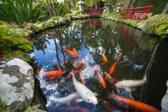 Giardino tropicale Monte Palace, lago con Koi Immagini Stock