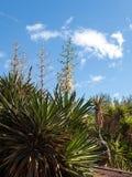 Giardino tropicale su Fuertenevtura Fotografia Stock Libera da Diritti