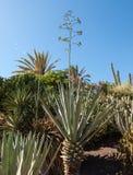 Giardino tropicale su Fuertenevtura Immagine Stock