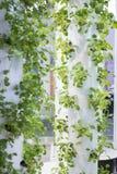 Giardino urbano Immagini Stock Libere da Diritti