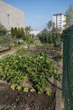 Giardino urbano Fotografia Stock Libera da Diritti