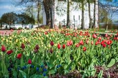 Giardino variopinto dei tulipani vicino al monastero di San Nicola (Nikolsky) Immagine Stock
