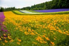 Giardino variopinto del fiore del fiore nel Giappone Fotografia Stock Libera da Diritti