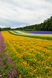 Giardino variopinto del fiore del fiore nel Giappone Fotografie Stock