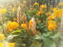 Giardino variopinto del fondo di tramonto del fiore arancio Fotografia Stock
