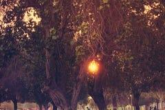 Giardino variopinto della molla alla luce solare di sera luce solare che sbircia in mezzo all'albero Pianta sempreverde ed albero Fotografie Stock