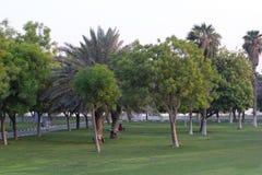 Giardino variopinto della molla alla luce solare di sera Concetto di giardinaggio della primavera Pianta sempreverde ed albero Fotografie Stock