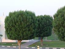 Giardino variopinto della molla alla luce solare di sera Concetto di giardinaggio della primavera Pianta sempreverde ed albero Fotografie Stock Libere da Diritti