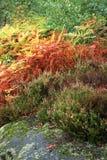 Giardino variopinto delle montagne di autunno. Immagine Stock