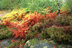 Giardino variopinto delle montagne di autunno. Fotografia Stock