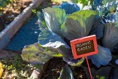 giardino vegatable Fotografie Stock Libere da Diritti