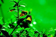 Giardino verde Fotografia Stock Libera da Diritti