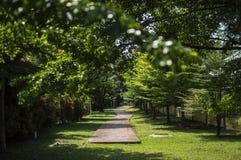 Giardino verde con gli alberi e la via Immagini Stock