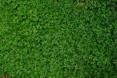 Giardino verde di permesso fotografia stock