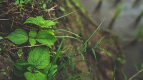 Giardino verde fresco dell'albero della foglia immagine stock