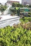 Giardino verticale Fotografie Stock Libere da Diritti