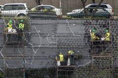 Giardino verticale Immagini Stock Libere da Diritti