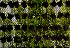 Giardino verticale Fotografie Stock