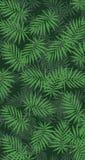 Giardino verticale con la foglia verde tropicale Immagini Stock Libere da Diritti