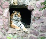 Giardino zoologico 33 di Mosca Fotografie Stock Libere da Diritti