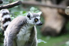giardino zoologico dell'animale di amersfoort Immagine Stock