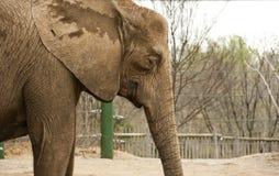 Giardino zoologico dell'elefante Immagine Stock Libera da Diritti