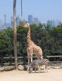 Giardino zoologico di Sydney Fotografia Stock