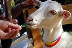 Giardino zoologico Petting Fotografia Stock
