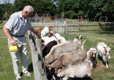 Giardino zoologico Petting Immagini Stock