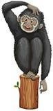 Gibbon Στοκ φωτογραφία με δικαίωμα ελεύθερης χρήσης