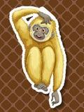 Gibbon Royalty Free Stock Photography