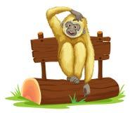 Gibbon, der auf Klotz sitzt Lizenzfreies Stockfoto