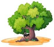 Gibbon e un albero Fotografia Stock Libera da Diritti