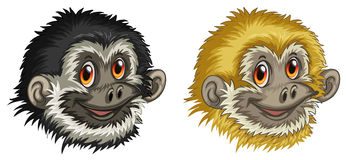 Gibbon faces Royalty Free Stock Photo
