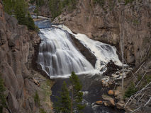 Gibbon Falls. Yellowstone National Park Royalty Free Stock Image