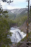 The Gibbon Falls in the Yellowstone National Park. In early spring. The Gibbon River is partly flowing along the Grand Loop Road of the Yellowstone National Stock Images