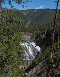 Gibbon Falls. In Yellowstone National Park in Wyoming Royalty Free Stock Image