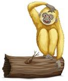 Gibbon on log Stock Images