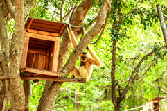 Gibbon mit Haus auf Baum Lizenzfreie Stockfotos
