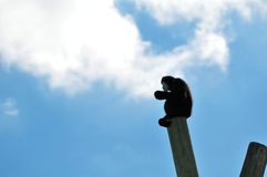 Gibbon monkey sitting on top of a pole Royalty Free Stock Photography