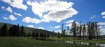 Gibbon River flowing through Gibbon Meadows in Yellowstone National Park in Wyoming USA Stock Photo