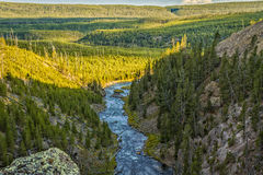 Gibbon River in Yellowstone National Park. Just below the  84 foot Gibbon Falls Stock Photography