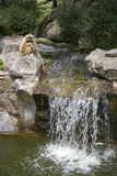 Gibbon is sitting over the waterfall. Zoo, Thailand Stock Image