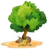 Gibbon and tree Stock Photo