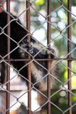 Gibbons-Füße mit Käfig Stockfoto