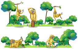 Gibbons living in the forest Stock Images