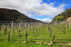 Gibbston Valley Winery. On the south island of New Zealand Royalty Free Stock Images