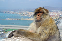 Gibraltar Royalty Free Stock Photos