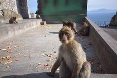 Gibraltar Zdjęcia Royalty Free