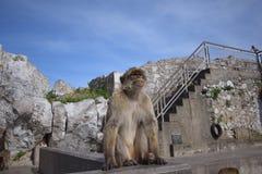 gibraltar Foto de Stock Royalty Free
